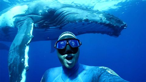 Diver captures selfie with giant whale while swimming in ocean