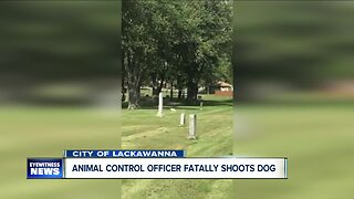 Dog shot and killed by Lackawanna animal control officer