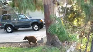 Playful bear cub is too cute - Video