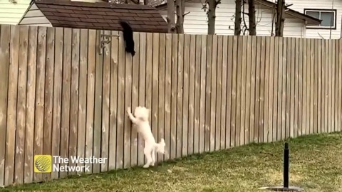 Unlikely animal friends, squirrel and dog play on backyard fence