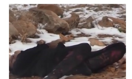Lebanese Civil Defense Finds Bodies of Syrians Frozen to Death Near Border