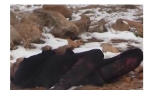 Lebanese Civil Defense Finds Bodies of Syrians Frozen to Death Near Border - Video