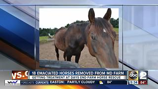 18 starving horses rescued from farm in Lisbon; charges pending - Video