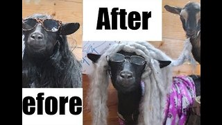 Life Before and After Kids - As Told by Goats - Video
