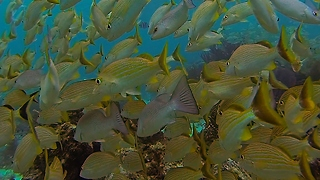Diver swimming through colorful fish creates beautiful effect - Video