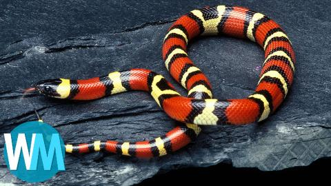 Top 10 Harmless Animals That People Are Scared Of