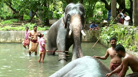 Elephant Spa: Baths, Massages & Treatments At Rejuvenation Centre