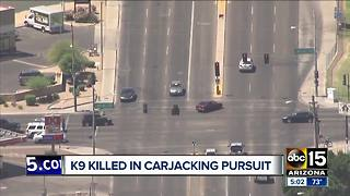 Phoenix carjacking suspect taken into custody, police K-9 killed