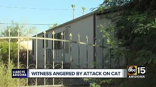 Man witnesses neighbor allegedly beating cats with hammer - Video
