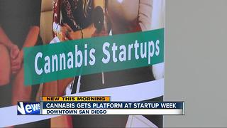 Cannabis gets platform at Startup Week - Video