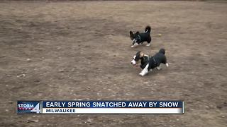Spring snatched away with March snowfall