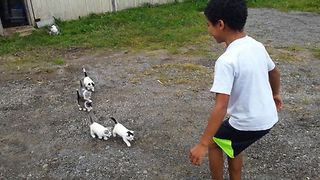 16 Cutest Kids And Cats - Video
