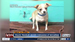 McCarran airport traveler accused of abusing chihuahua - Video