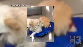 Dog owners want change after deadly dog park attack - Video