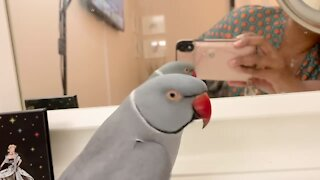 Very vocal parrot talks to his reflection in the mirror