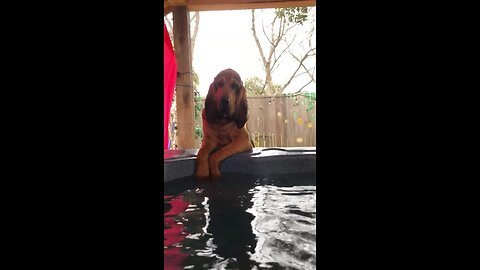 Bloodhound Cannonballs Into Jacuzzi In Epic Fashion