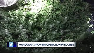 Marijuana grow operation found in Ecorse - Video