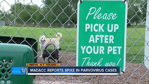 Deadly dog virus makes its way to Milwaukee