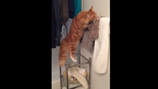 Cat has weird fascination with socks - Video