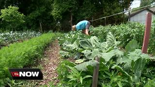 Victory garden initiative expanding - Video