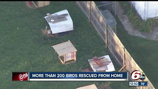 More than 200 birds rescued from home - Video