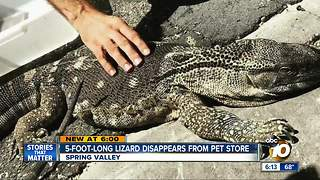 5-foot-long lizard disappears from pet store