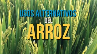 Usos Alternativos Del Arroz - Video