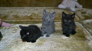 Three cute kittens - Video