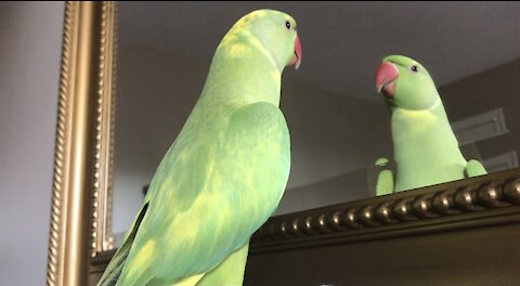Clever parrot learns how to answer questions when asked