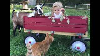Baby Max Enjoys Time With Goats