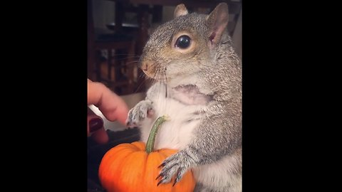 Halloween is coming to squirrel town