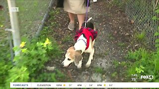 Pet of the Week: Taking Icee on a walk at GCHS