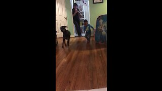 Best friends: Doggy can't stop playing with little boy