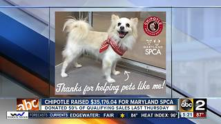 Chipotle releases how much money raised for Maryland SPCA - Video