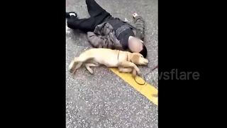 Adorable moment dog tries to revive owner who passed out in street - Video
