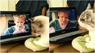 Cat learns to cook with Gordon Ramsay