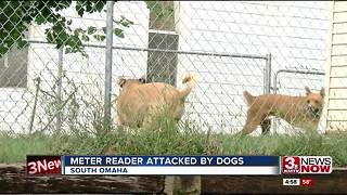 Utility worker attacked by dogs - Video