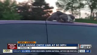 Video of cat on van goes viral - Video