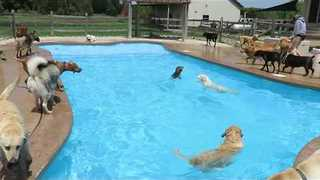 Happy Dogs Enjoy a Spring Swim - Video