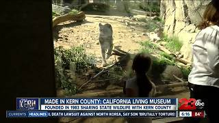 Made in Kern County: CALM Zoo - Video