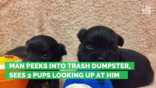 Man Peeks into Trash Dumpster, Sees 2 Pups Looking Up at Him - Video