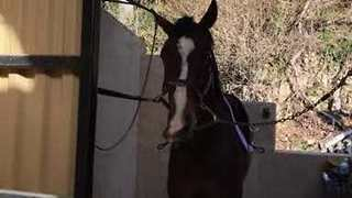 Quit Horsing Around! Horse Makes Funny Shapes With Nose - Video