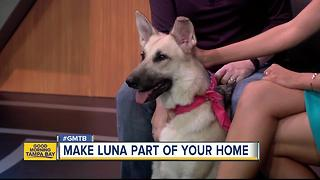 July 29 Rescues in Action: Luna longs for forever home