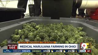 Why Ohio's medical marijuana industry relies on an 'immaculate propagation' - Video