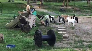 Kids Stampede With Joy After Breakfast Time - Video