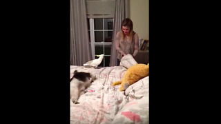Cockatoo attacks girl for sitting on his bed - Video
