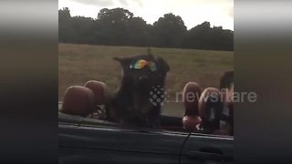 This is probably the world's coolest dog