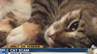 Woman's search effort to find missing cat making her target for scammers - Video