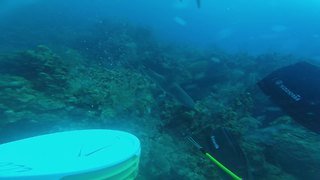 Diver pushes his luck with aggressive reef sharks - Video