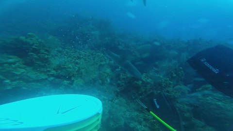Diver pushes his luck with aggressive reef sharks